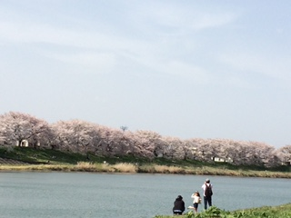 ookawra sakura