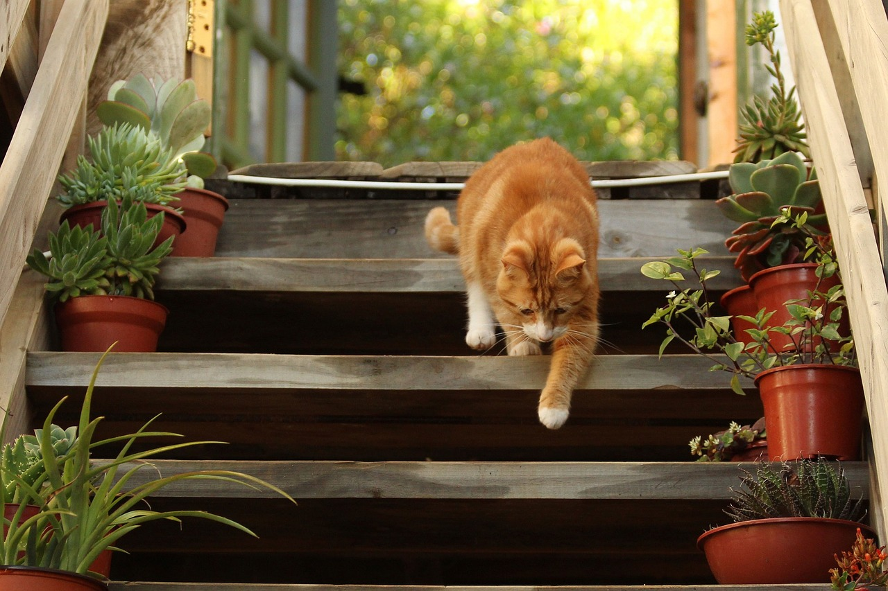 step and a cat
