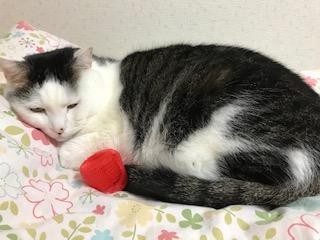 猫の寝姿は癒される